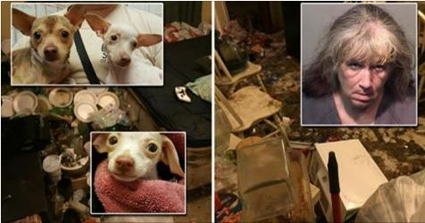2 Teens, 34 Chihuahuas, 6 Birds Removed From Home Riddled With Feces, Trash and Cockroaches