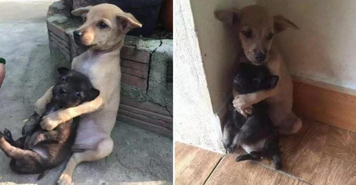They Rescued Two Puppies From The Street. What They Do Seconds Later? Tears.