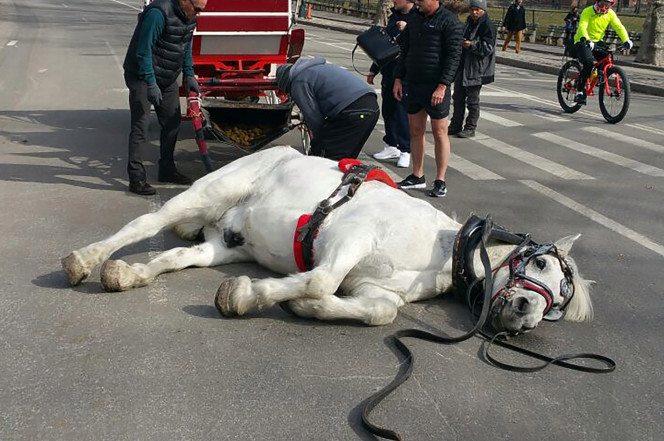 cenral park horse