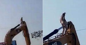 Naked man climbs excavator and masturbates